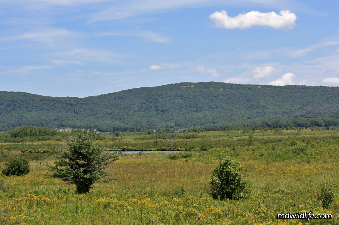 Marshes beyond Canaan Valley Refuge